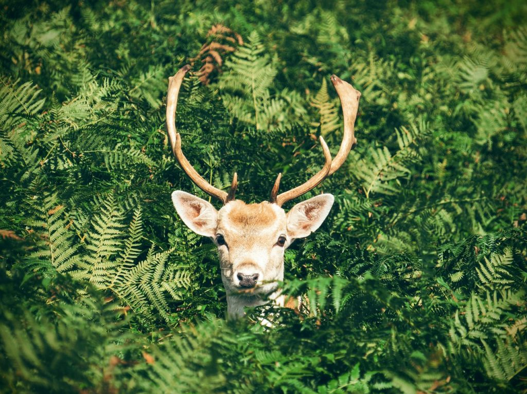 a reindeer in the brush